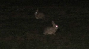 San Francisco bunnies at night 2 Kopie
