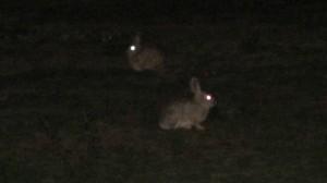 San Francisco bunnies at night 2 Kopie